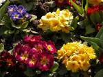 Flowers at St. Sophia