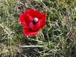 Flower at Aphrodisias